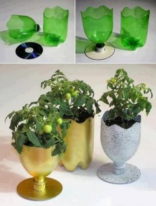 DIY Ideas - Plastic Bottle Plantation