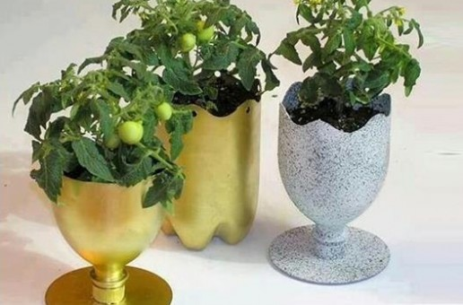DIY Ideas – Plastic Bottle Plantation
